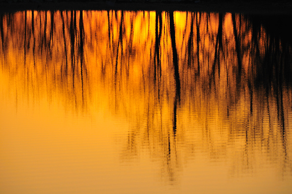Golden Water Tree
